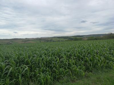 Praktische Landwirtschaft